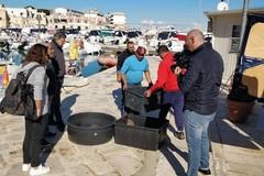 A mezzogiorno la liberazione in mare di tre esemplari di Caretta caretta