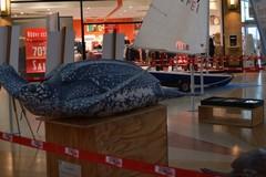Tutela del mare e sport al Gran Shopping Mongolfiera di Molfetta