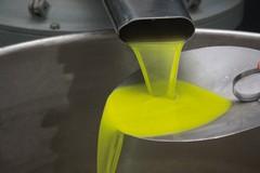 L'annata orribile dell'olio: calo del 50%, ma qualità ottima