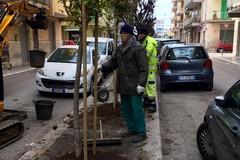 Addetti alla pulizia, ai parcheggi, alla manutenzione: la Multiservizi Molfetta cerca personale