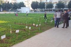 I ragazzi dell'Itc realizzano il primo orto urbano a Molfetta