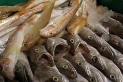 """La vendita diretta del pescato di Molfetta tra gli """"Ori di Puglia"""" a Expo"""