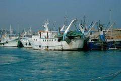 Pescherecci di nuovo in mare. Torna il pesce fresco sulle tavole a Molfetta e in Puglia