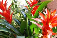 Tutti i segreti per curare le piante di appartamento