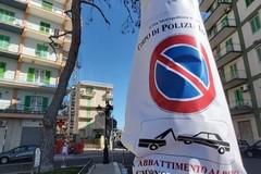 Pino abbattuto in Piazza Moro, interviene anche Legambiente Molfetta