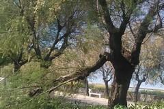 Rione Madonna dei Martiri, il Comitato di quartiere contro l'amministrazione