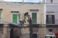 Quartiere San Domenico a Molfetta sotto shock, tagliato l'albero della Vita