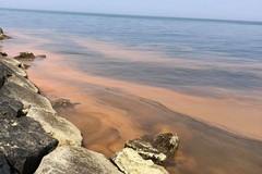 Dalla Prima alla Terza Cala mare rosso: inquinamento o effetto ancora di un'alga?