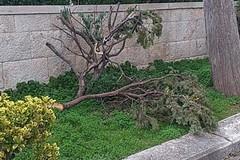 Maltempo, ancora danni nel cimitero di Molfetta
