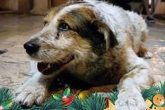 """Rufus un testimonial speciale per la campagna """"Io ho paura dei botti"""""""
