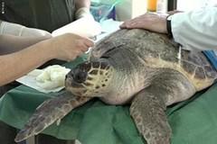 Il centro recupero tartarughe di Molfetta su RTV Slovenija