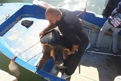 Salvate tre tartarughe, oggi la liberazione grazie al WWF Molfetta