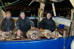 Venti tartarughe marine affidate al Centro di recupero di Molfetta