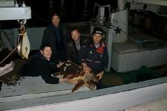 """Centro di Recupero Tartarughe Marine, il peschereccio """"Eccelsa"""" salva un esemplare"""