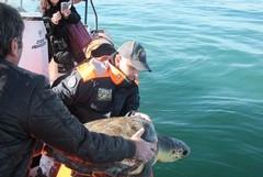 Il centro di recupero per tartarughe si trasferisce a Bisceglie