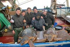 Quarantacinque le tartarughe recuperate e affidate al Centro di Recupero di Molfetta