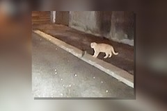 Topi nel Rione Arbusto a Molfetta, ieri lotta con un gatto randagio