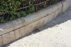 Emergenza sanitaria in città? Ancora avvistamenti di topi: LE IMMAGINI