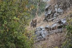 Scoperta a Lama Martina: volpi e cuccioli nel polmone verde di Molfetta