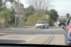 Forte vento a Molfetta: cede un albero su viale XXV Aprile