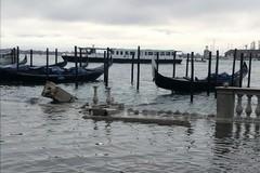 Venezia in ginocchio, il racconto di una studentessa di Molfetta