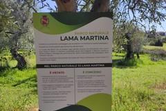 Lama Martina, lo scrigno verde di Molfetta che va protetto dall'inciviltà