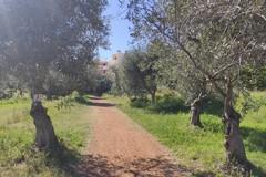 Sopralluoghi a Lama Martina: tagliati alberi da frutta e non ulivi