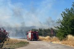 Incendio nella campagna di Molfetta in zona SS16 bis