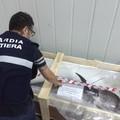 Pesce non tracciato: sequestrate 9 tonnellate dalla Guardia Costiera