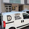 """Attivato a Molfetta da DogStars il servizio di """"Dog taxi"""""""