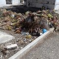 Cimitero: è di nuovo emergenza pulizia? - LE FOTO