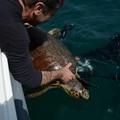 GenerAzioneMare: Natalina, la tartaruga caretta caretta torna in libertà