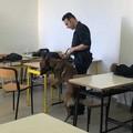 Cani antidroga in classe: controlli dei Carabinieri all'Alberghiero