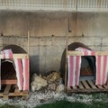 Nella zona industriale di Molfetta cucce per tutti i cani randagi