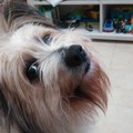 Cani morti avvelenati a Molfetta, i proprietari: «Chi ha visto denunci»