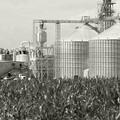 Centrale biomassa a Molfetta: ecco il progetto approvato dalla Provincia