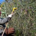 Nuovo contratto provinciale agricolo in terra di Bari
