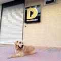 """""""DogStars, we are different """", un centro benessere per i cani a Molfetta"""