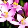 Cosa sono i fiori di Bach e come si usano