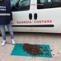 Ancora sequestro di datteri a Molfetta: in azione la Guardia Costiera