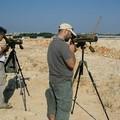 Conclusa l'attività di monitoraggio dell'area di nidificazione dei Fraticelli