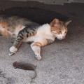 A Molfetta non si fermano le segnalazioni di topi per strade e a ridosso delle case