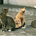 Mappatura delle colonie feline in città