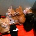 Oasi felina, colonie e gatti randagi: a Molfetta il protocollo per la tutela