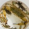 Pescato a Molfetta un rarissimo esemplare di granchio reale