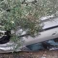 Incidente stradale sulla strada Ruvo-Molfetta: un'auto si ribalta in un fondo - LE FOTO