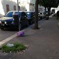"""Il verde nella scuola, l'immondizia abbandonata all'esterno della  """"Filippetto """""""