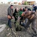 La Gepa Molfetta dona 30 alberi al Molise