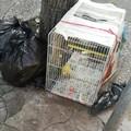 Macabro ritrovamento a Molfetta: canarino morto gettato fra i rifiuti