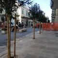 Ampliata la zona pedonale a Corso Umberto: stop alle macchine in Via Cairoli e Via Cozzoli